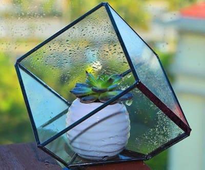 terrario-cubo