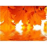 Foto mural hojas naranjas