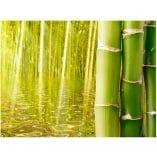 Foto mural bambu
