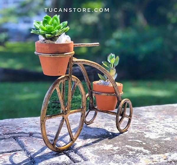 triciclo dorado cactus
