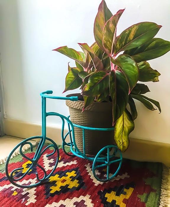 triciclo bicicleta tucan