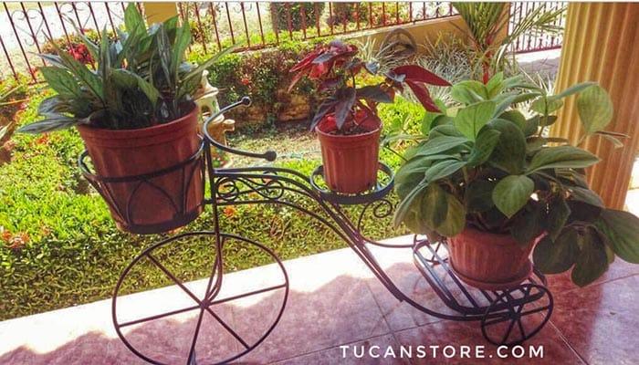 triciclo grande plantas
